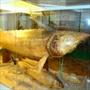 Музей природы Дона